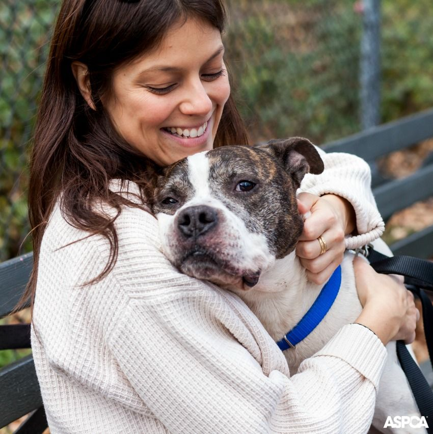 May Is National Foster Care Month We Hope You Ll Consider Fostering A Shelter Pet Dog Parents Foster Dog Animal Rights Organizations