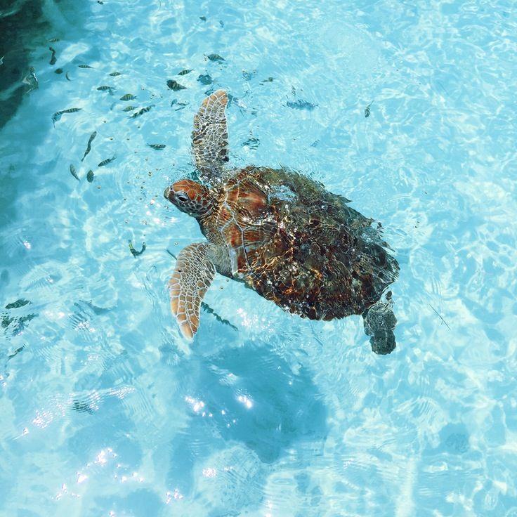 July 9 2015 1 09 Pm Asanpietro Vsco Grid Sea Turtle Wallpaper Turtle Turtle Love