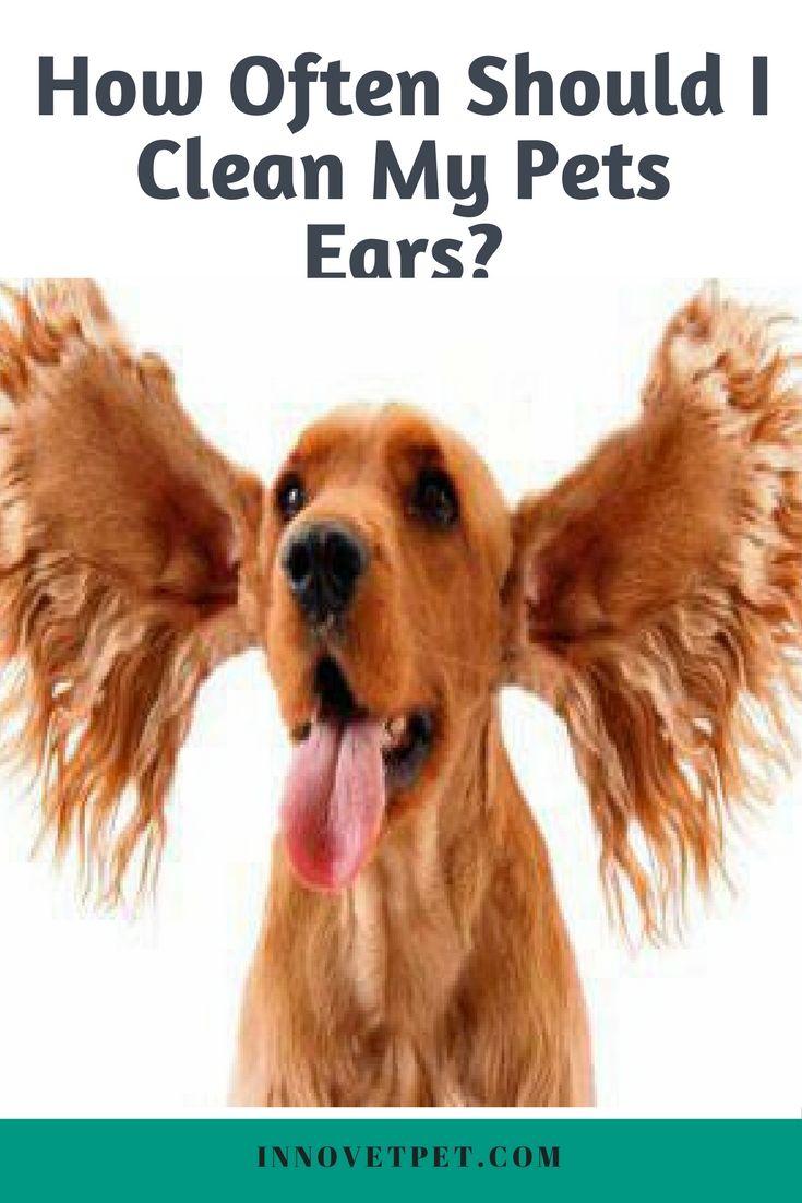 How Often Should I Clean My Pets Ears? Holistic pet care
