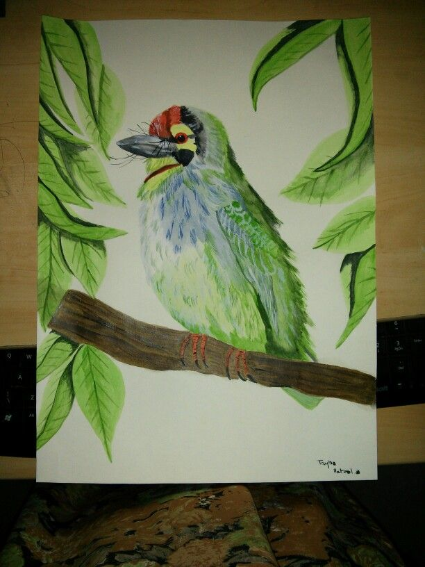 Watercolour painting of copper smith barbet