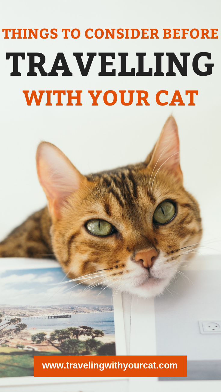 Planning to fly internationally with your cat? Tips for