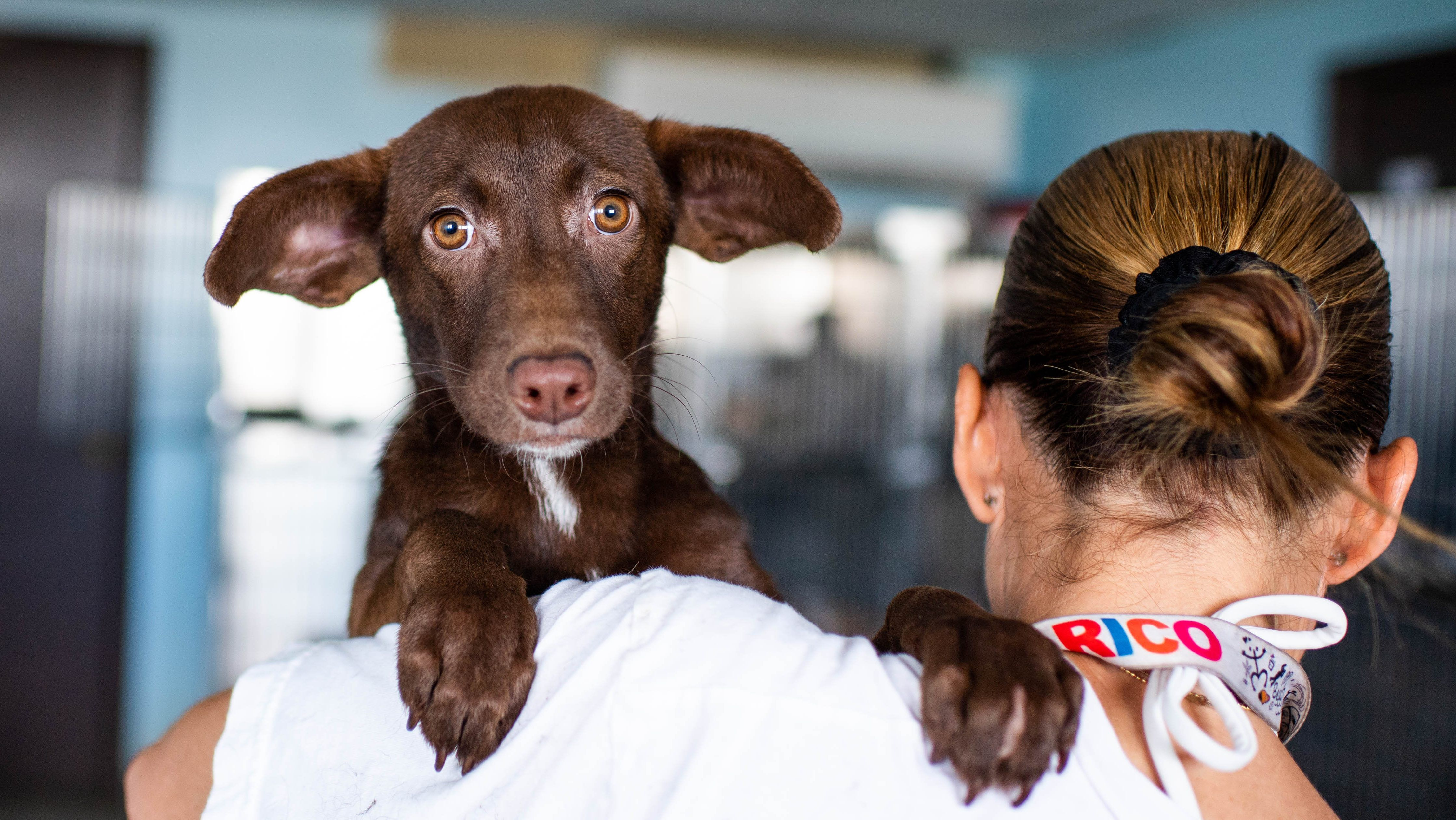 Meet The Organization Saving Thousands Of Dogs In Puerto Rico