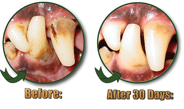 Before and Afters Testimonials & Reviews Dog Dental Care