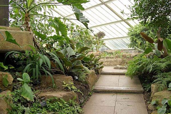 Glasdach Mikroklima Schaffung wintergarten Pflanzen Ideen Pflege