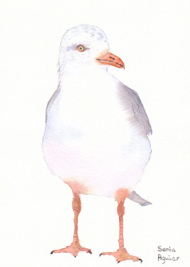 Blog Pensado Para Presentar Mis Acuarelas Y Otras Creaciones Artisticas Pajaro De Acuarela Pinturas De Aves Artistas