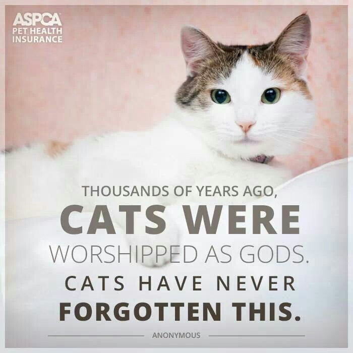 Funny Cats Pet Insurance Quotes Pet Health Pet Health Insurance