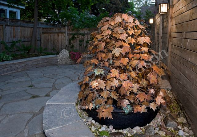 Exceptional Not Japanese, Per Se, But A Stunning Garden Fountain. This Canadian Artist  Makes Beautiful Botanical Fountains.