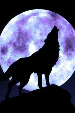 Cantándole A La Luna Luna Lobos Lobo Y Luna Y Luna Lunera