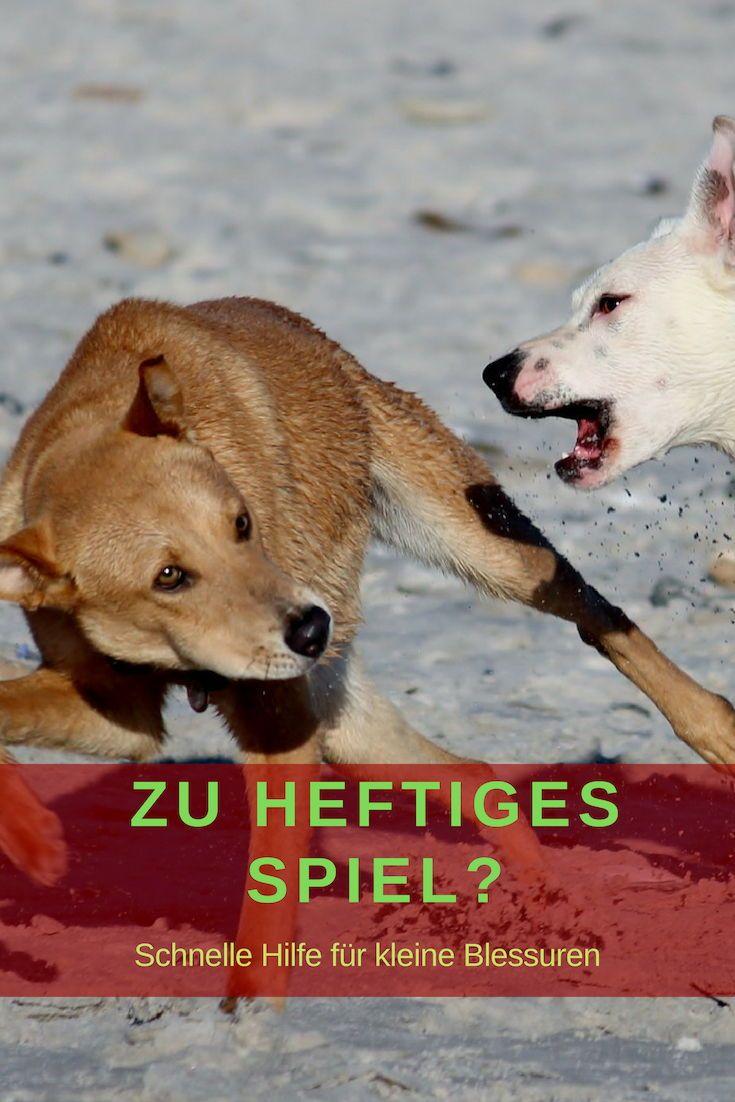Krätze bei hunden