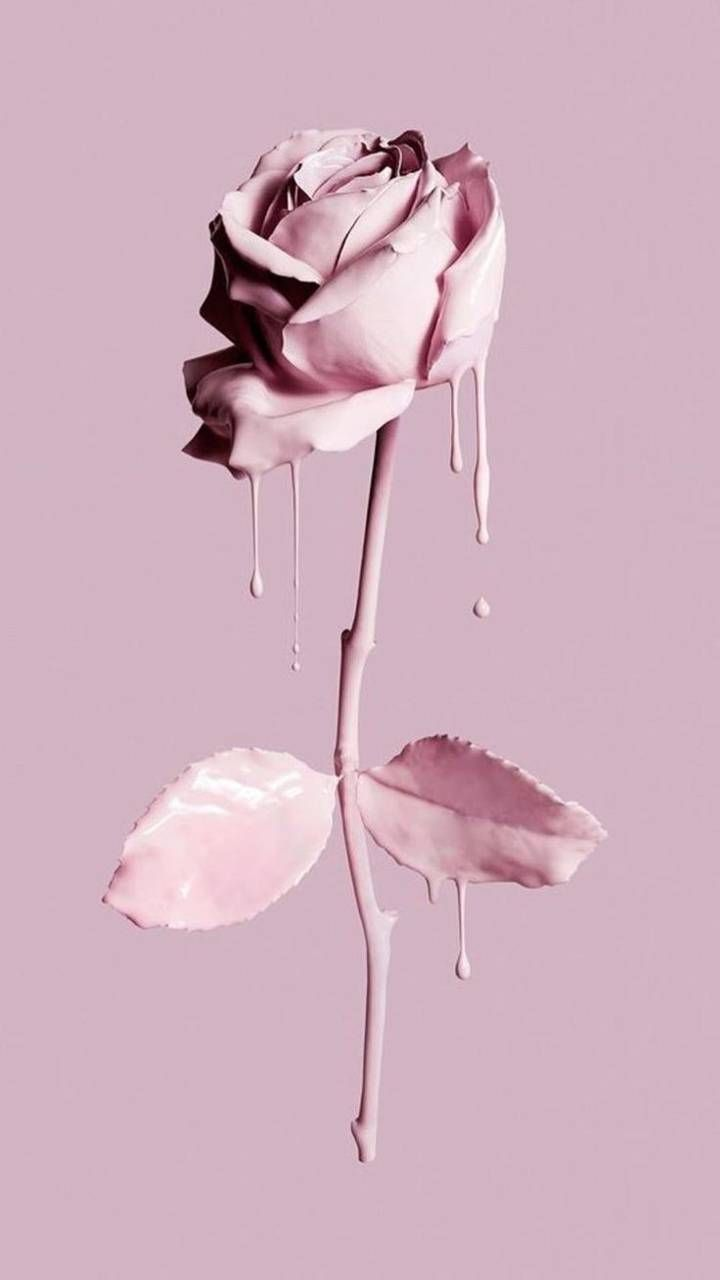 Pink Rose wallpaper by Queen_Courtney - ffdd - Free on ZEDGE™
