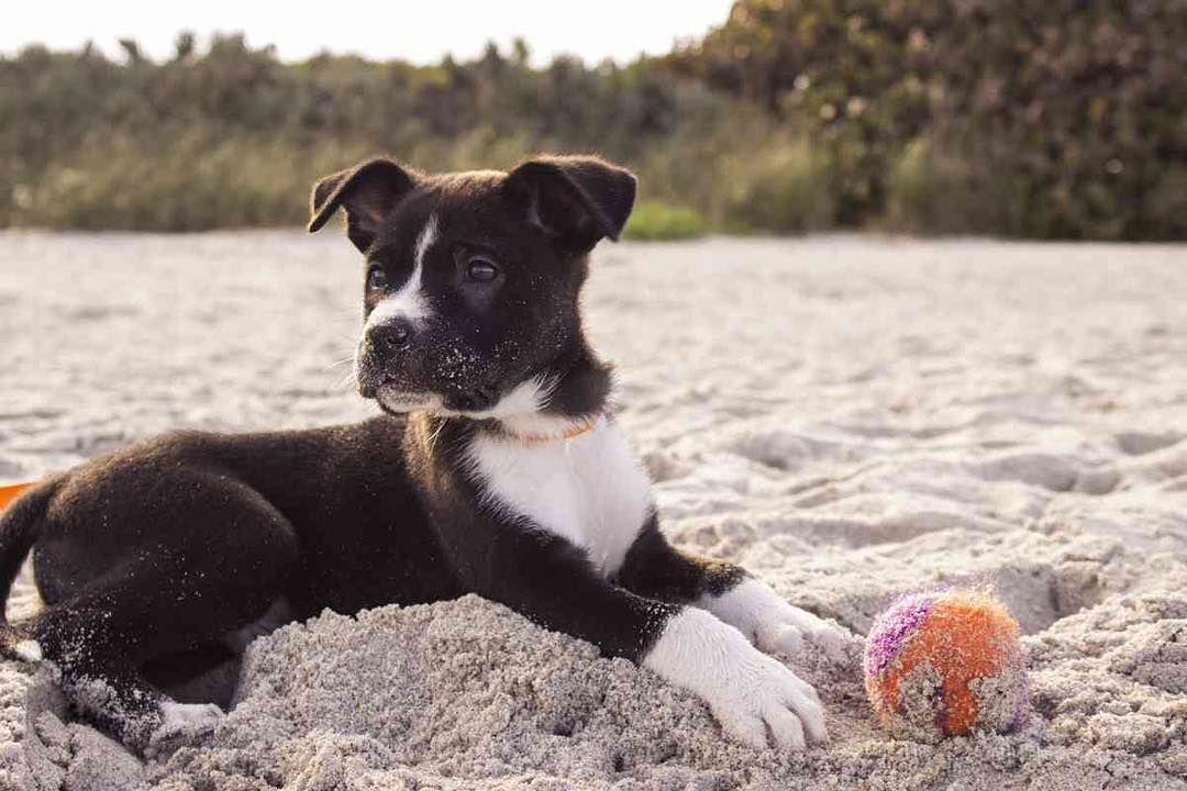 #dog #dog #puppy #pup #TagsForLikes #TagsForLikesApp #cute #eyes #instagood #dogs_of_instagram #pet #pets #animal #animals #petstagram #petsagram #dogsitting #photooftheday #dogsofinstagram #ilovemydog #instagramdogs #nature #dogstagram #dogoftheday #lovedogs #lovepuppies #hound #adorable #doglover #instapuppy #instadog http://ift.tt/2afvOPK
