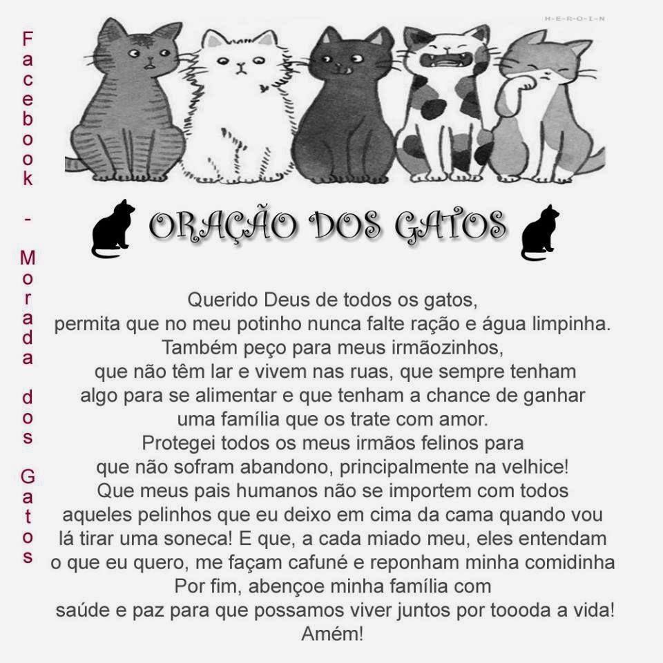 Morada dos Gatos - Facebook