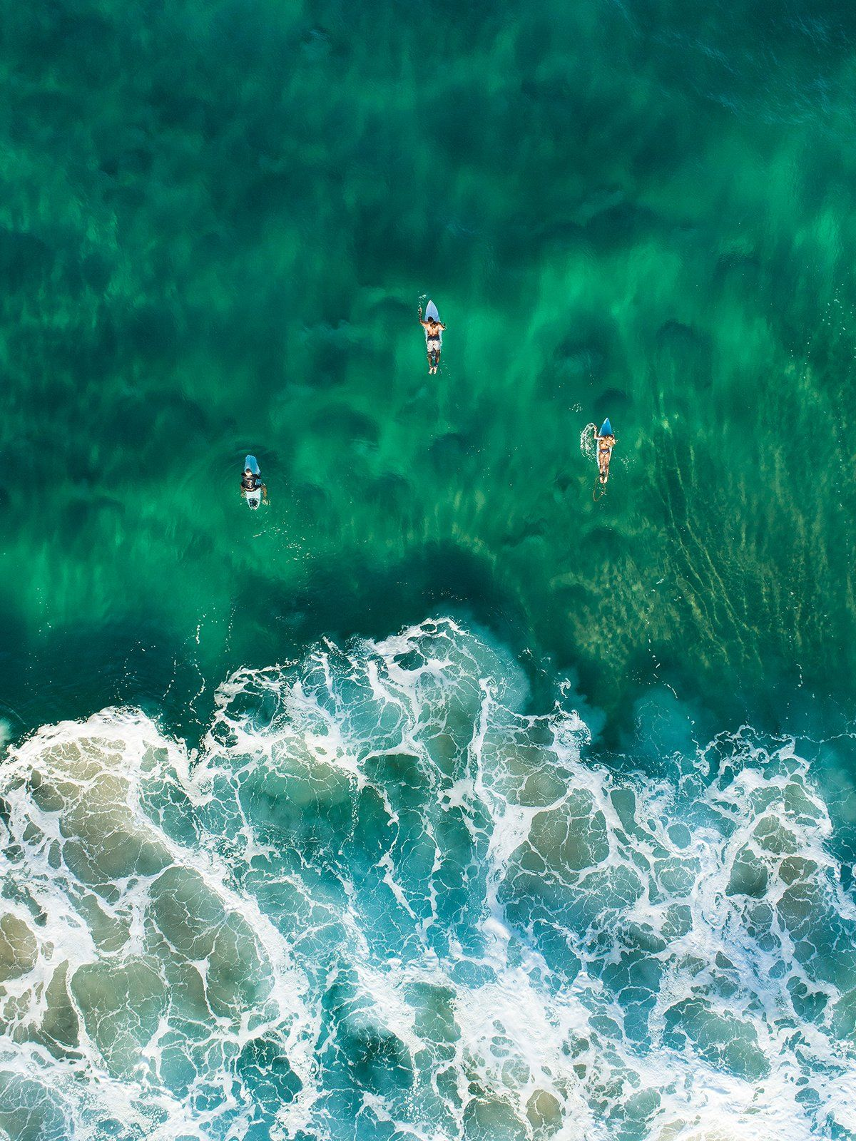 'Family' Coolum Beach Whale Season