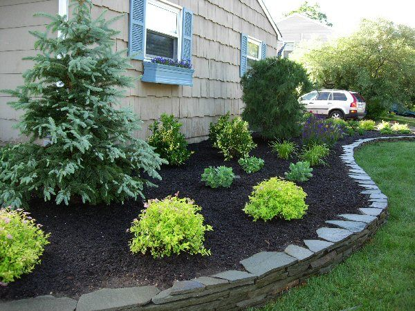 Like The Lime Green Bushes With Dark Mulch Front Yard