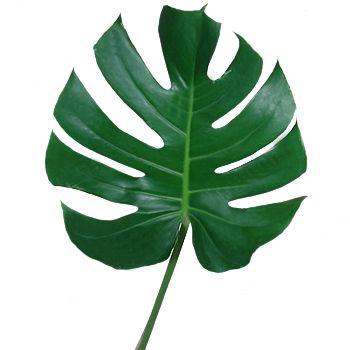 Monstera Leaves Tropical Greenery Wedding Flowers Plant Leaves Flowers House Plants