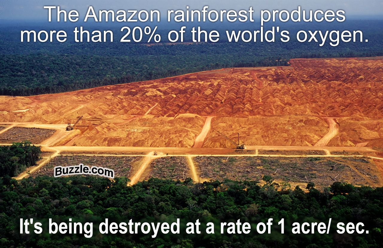 These Little Known Amazon Rainforest Facts Will Surely Astound You