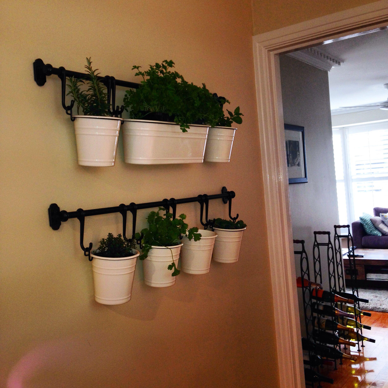 Indoor herb garden Hamptons style..