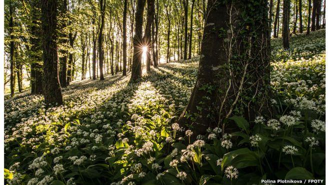 The wild garlic carpet - de Robin Goodlad (UK)  / FPOTY