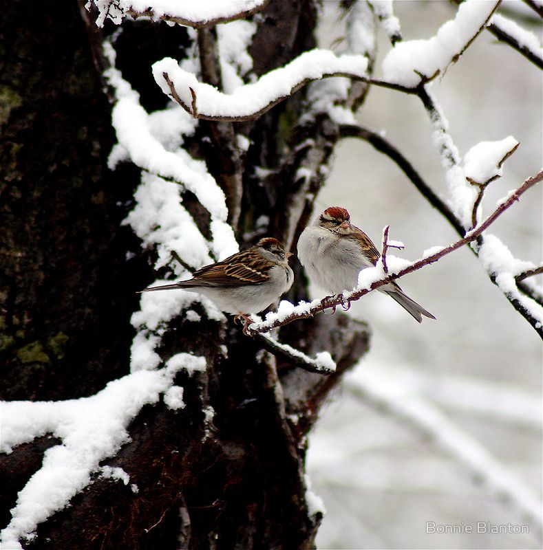 """""""Birds Of A Feather Flock Together"""" photography by Bonnie Blanton #birds #snow #winter"""
