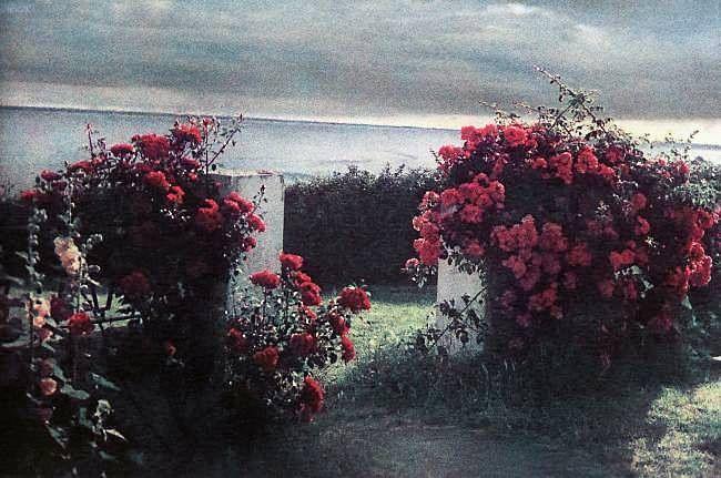 bernard plossu photographe - Recherche Google plants Pinterest
