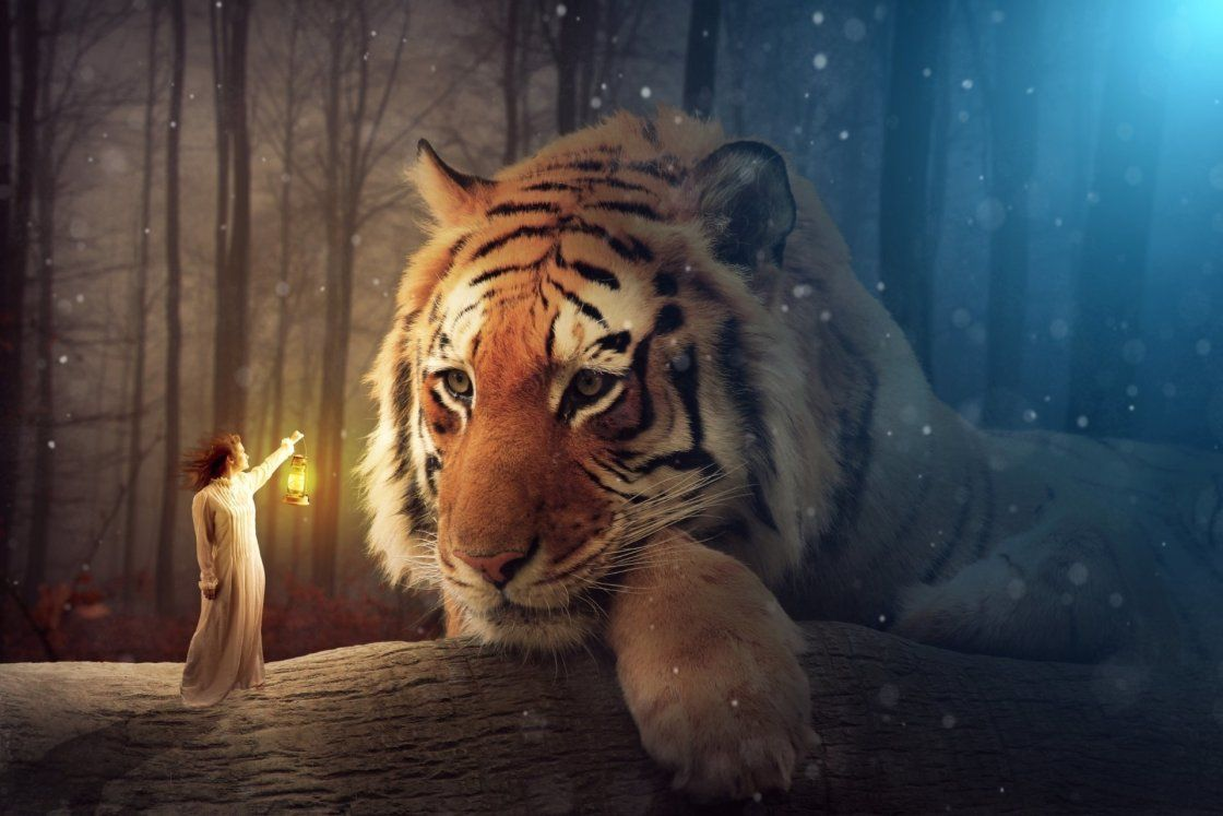 Tigre Feerie Voyage Onirique Art Tigre Animales Felin