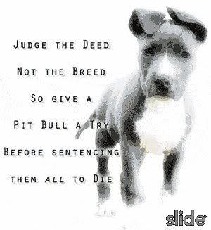 Pitbull Dog Quotes Pitbull Sayings And Quotes  Google Search  Pitbulls  Pinterest