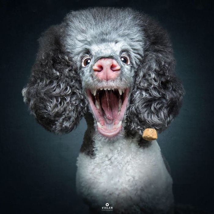 Hilarious Expressions Of Dogs Trying To Catch Treats In