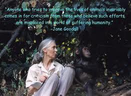 Jane Goodall Quotes New Jane Goodall Phrases  Buscar Con Google  Jane Goodall  Pinterest