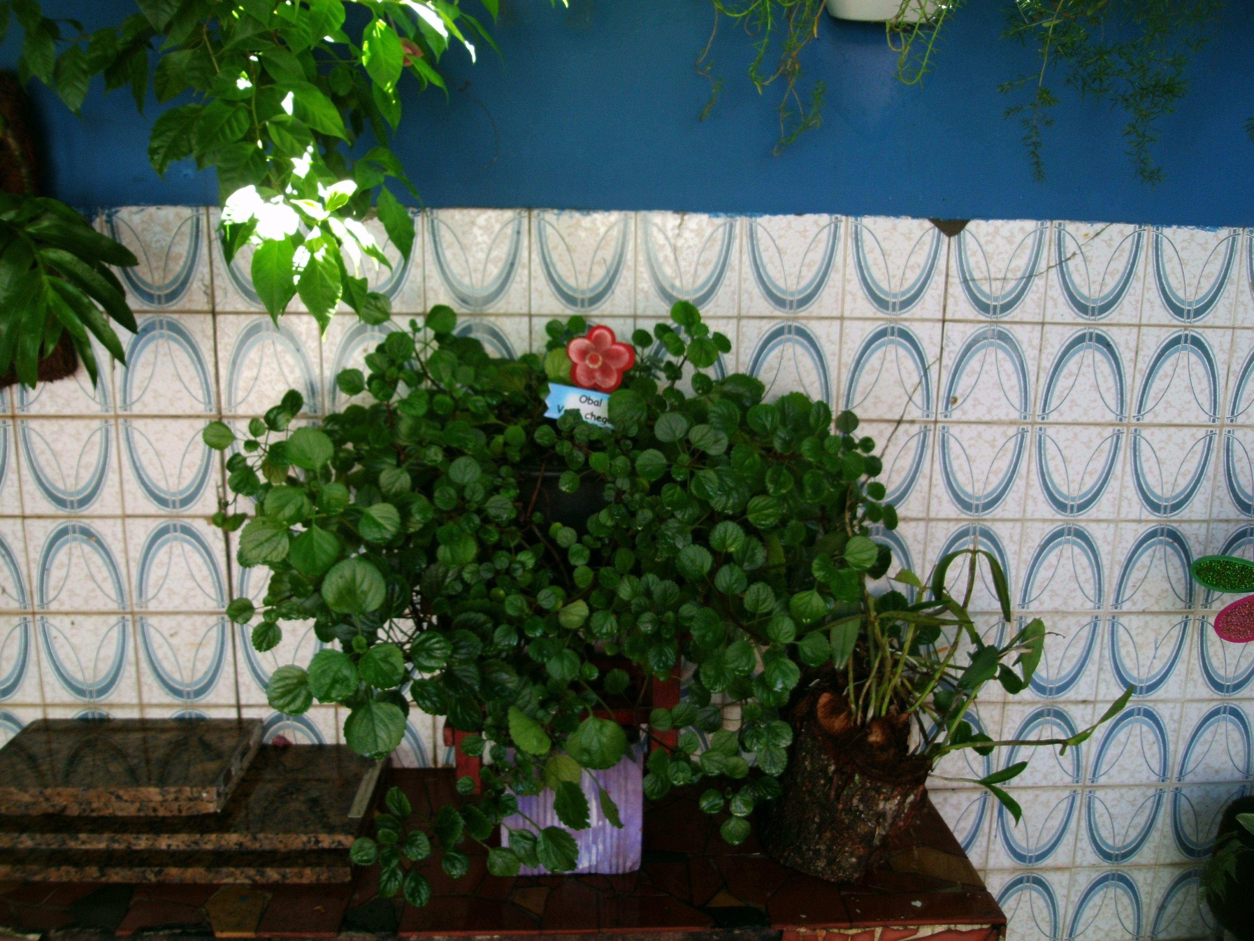 Jardim do Quintal no Rio de Janeiro (*_*)