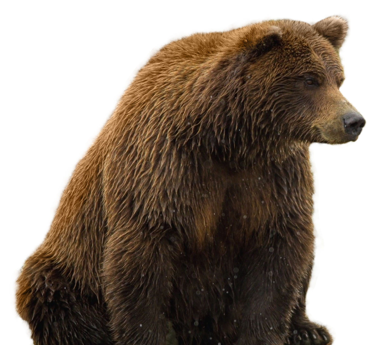 Bear Png Image Bear Teddy Bear Clipart Grizzly Bear