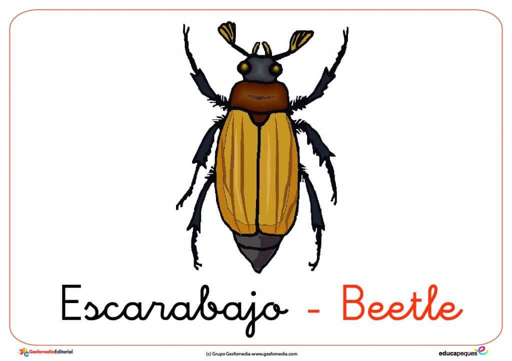 Fichas De Animales Para Niños Fichas De Los Insectos
