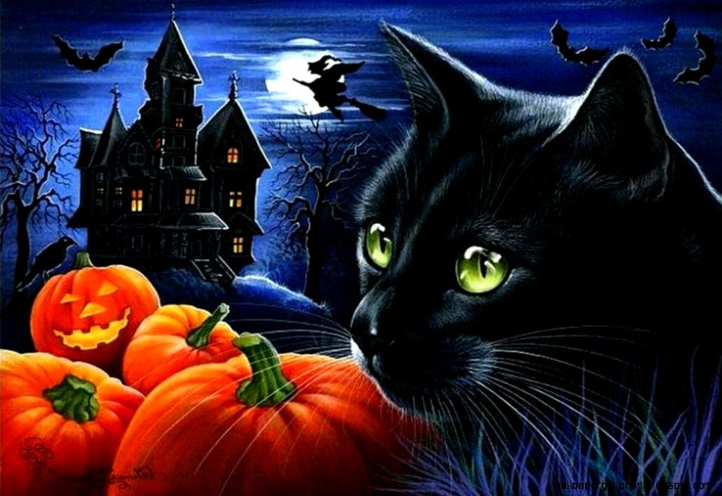 black-cat-halloween-pumpkin-night-animals-hd-wallpaper-free-cat.jpg (1033×709)
