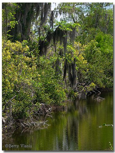 Pin By Stacy Hillesheim On Places I Have Seen Everglades Florida Everglades Adventure Resort