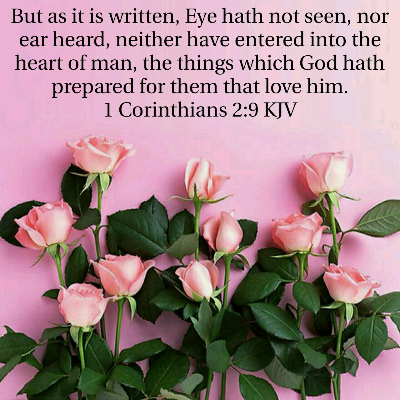 1 Corinthians 2:9 KJV   Phone wallpaper pink, Pink wallpaper iphone, Flowers photography wallpaper