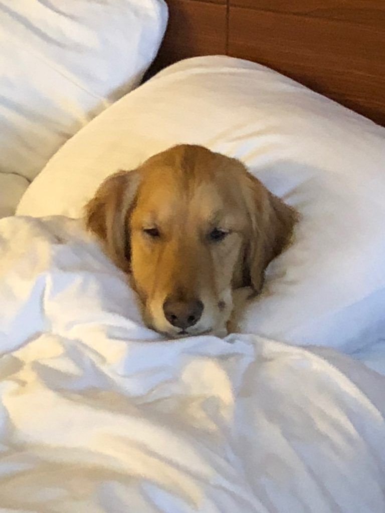 5 reasons science says your dog should sleep in your bed