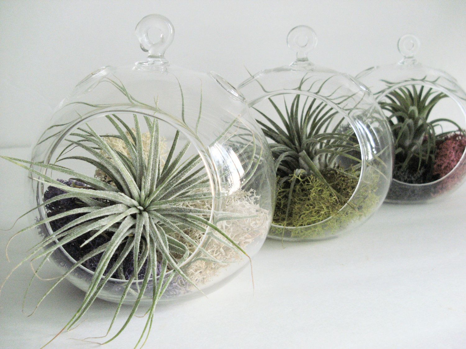 Small hanging air plant terrarium your choice of moss colors 45 cheap planters vases buy quality terrarium set directly from china diy planters suppliers diy planter vase with air plant mosshanging crystal glass orb reviewsmspy