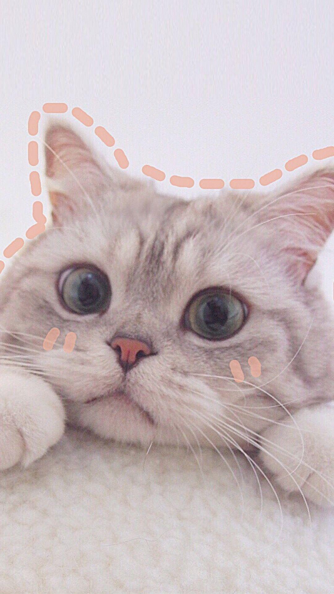 Pin Oleh Finn Di Just Cat Things Dengan Gambar