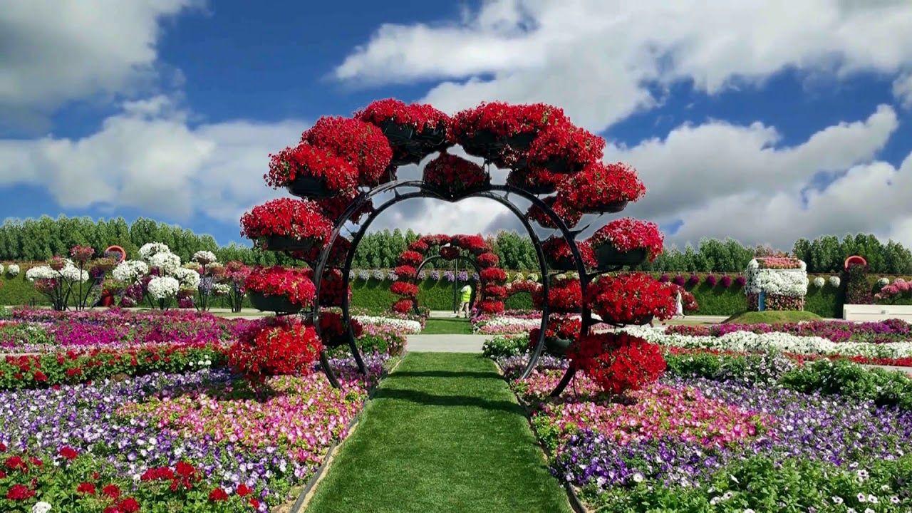 Miracle Garden Worlds Largest Flower Garden Dubai HD