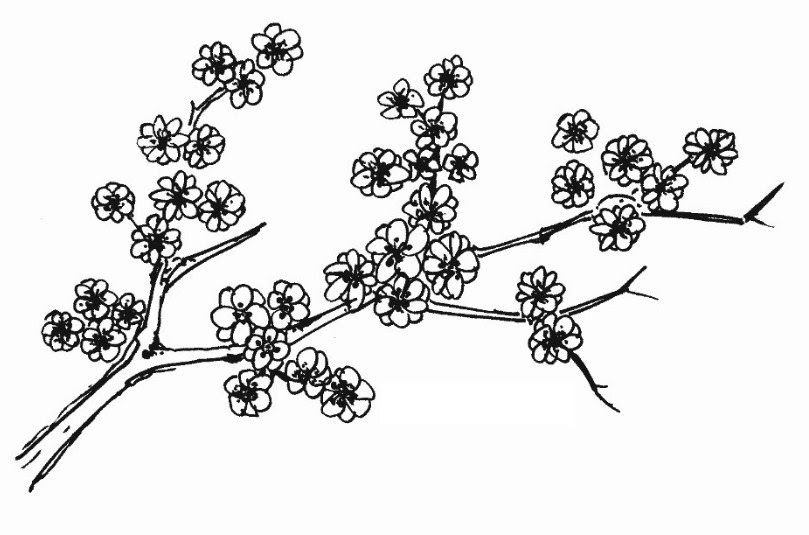 Paling Populer 18 Contoh Lukisan Bunga Sakura Sederhana Gambar Bunga Sakura Dari Pensil Gambar Bunga Melukis Bu Lukisan Bunga Gambar Bunga Lukisan Sederhana