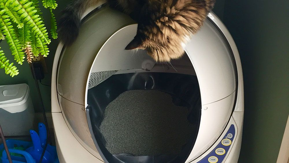 Pin By Super Whiskers On Cats Automatic Litter Box Self Cleaning Litter Box Best Litter Box