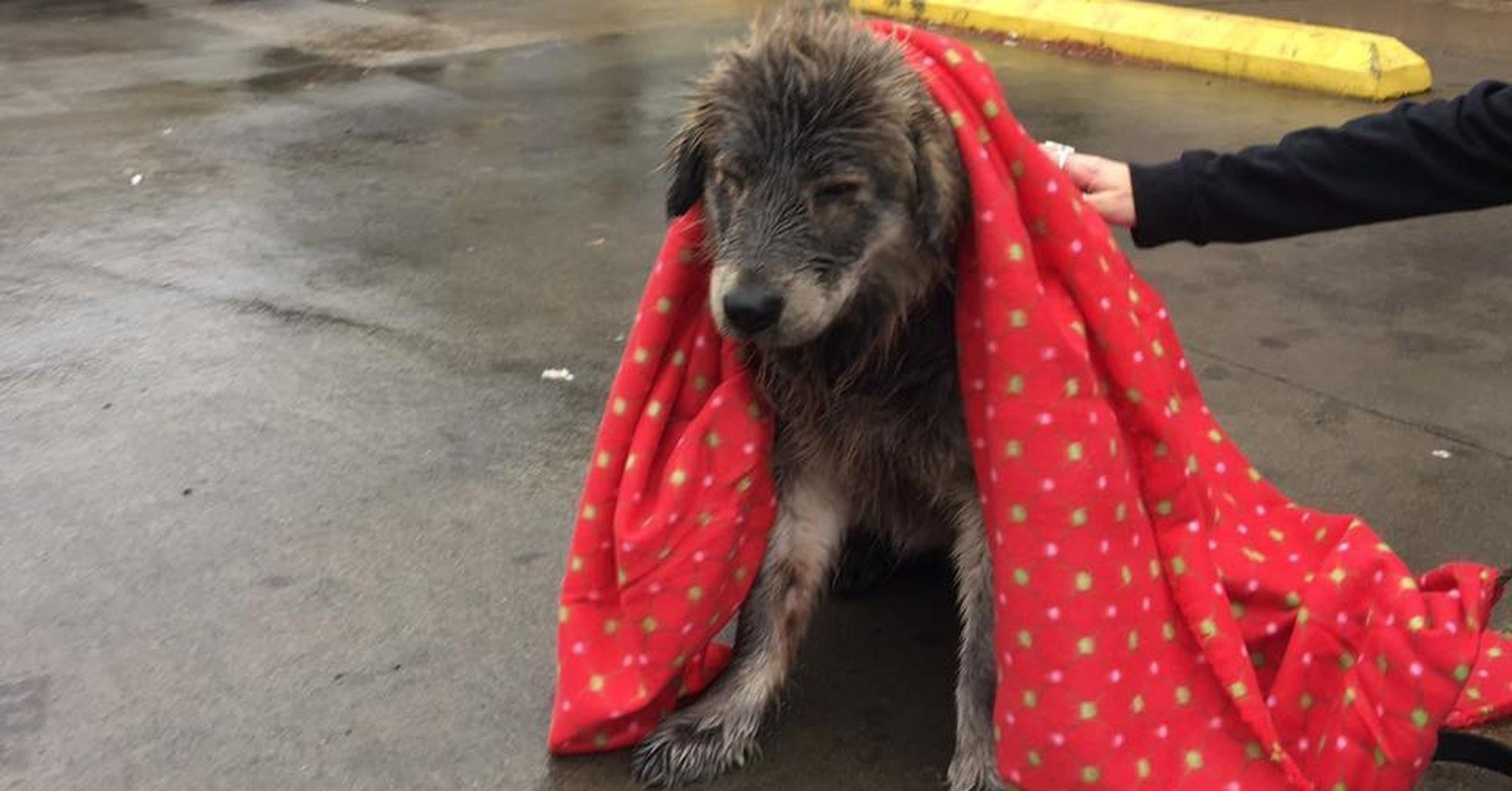 Dog Abandoned In Rain Is Too Scared To Even Move Dogs