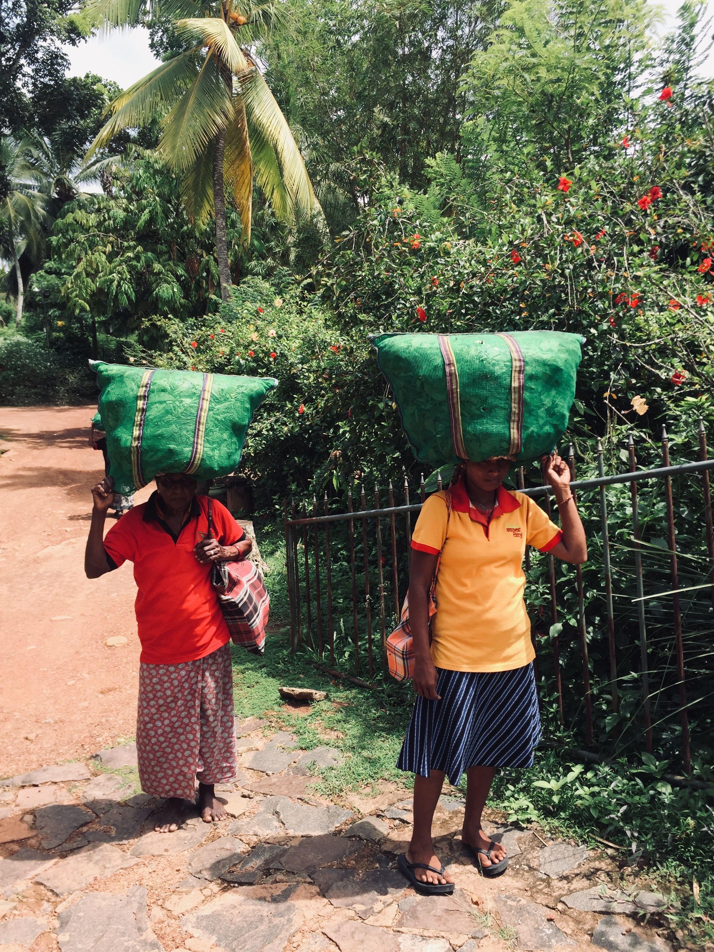 Sri Lanks image by Heidrun Sri lanka, Amazing