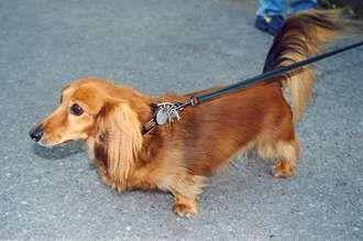 Rsnickynatne 330g 330219 dachshund hair cuts pinterest rsnickynatne 330g 330219 dachshund hair cuts pinterest long haired dachshund and dachshunds winobraniefo Gallery