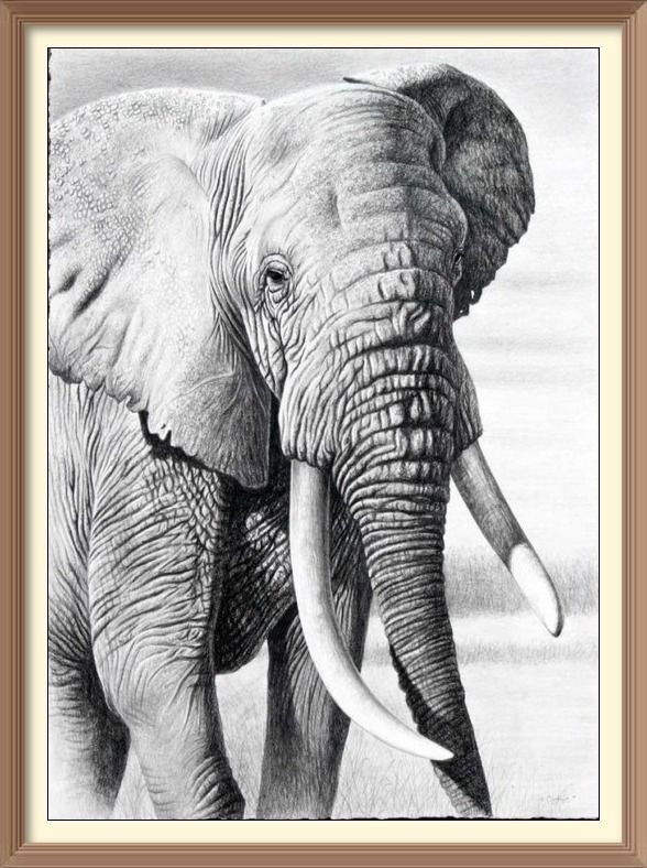 elefante asiatico pandora