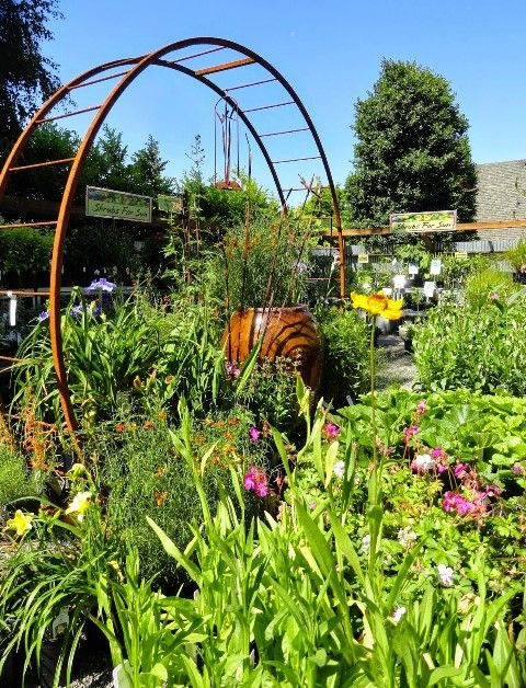 wow here is a beautiful display with our portal arbor at garden fever in portland oregon - Garden Fever