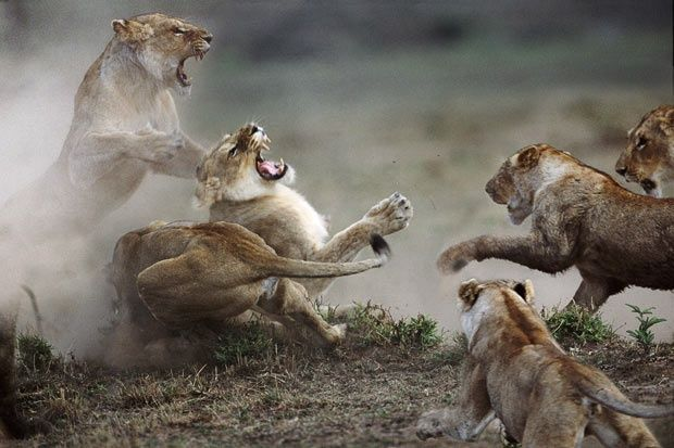 Animals Fighting for Survival