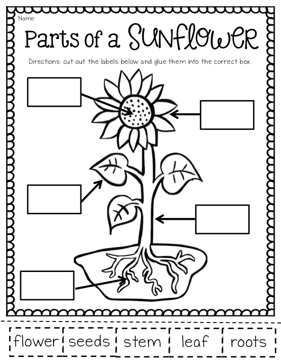 Ship Shape First Grade: The May Packet (and FREEBIES ...