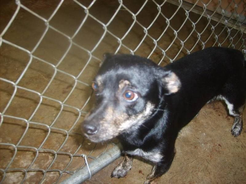 Adopt Speckles Urgent On Petfinder Dog Pounds Dog People Adoption