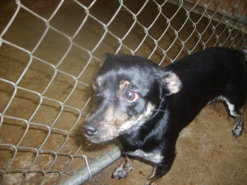 Adopt Speckles Urgent On Petfinder Dog Pounds Adoption