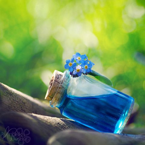 Essence of forget-me-not,